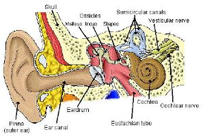 Vertigo Vestibular Disorders